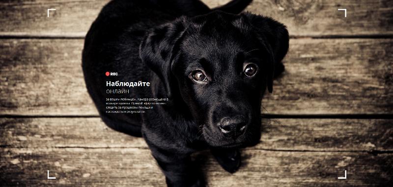В России запущен необычный сервис помощи бездомным животным