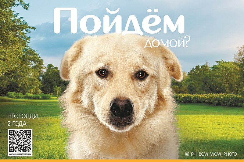 «Пойдем домой?»: Pedigree и «Мосгорпарк» запустили интерактивные фотовыставки о бездомных собаках